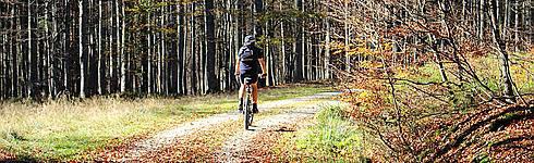 Schöner Bayerischer Wald